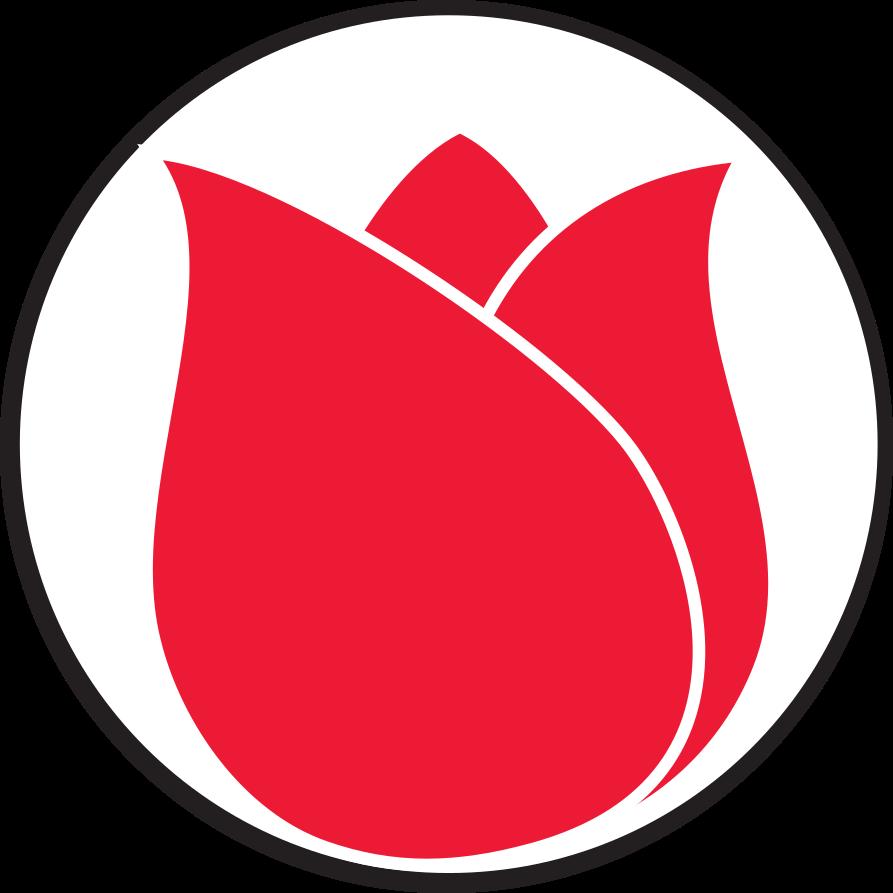 Lakewood Tulip